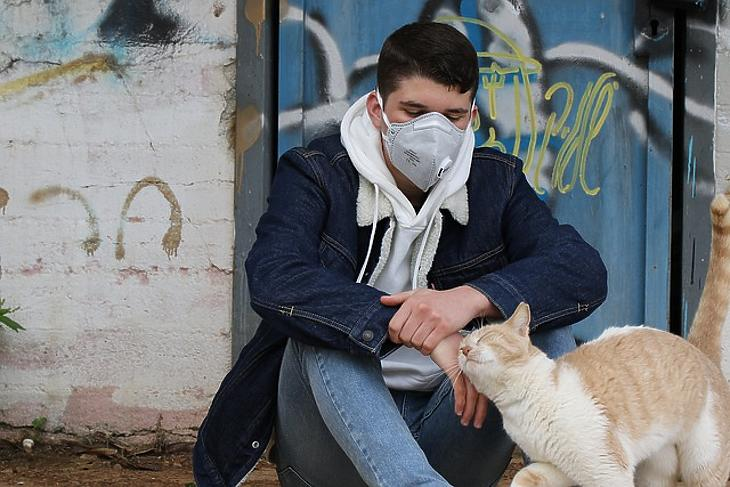A macskák a legfogékonyabbak a koronavírusra. Fotó: Pixabay