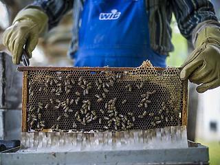Nem kell szja-t fizetni a méhészeknek