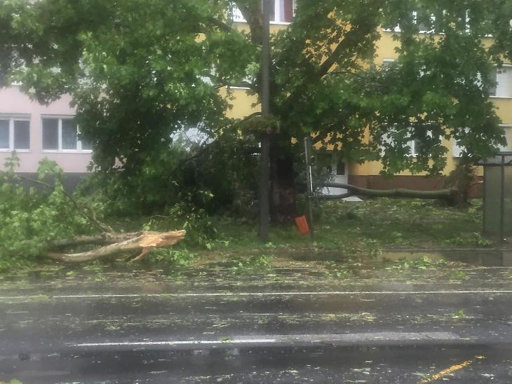 A vihar megtépázta a fákat Szabolcsban, számos ág le is tört. Mátészalkán például így festett mindez. (Fotó: Székely Sarolta/mfor.hu)