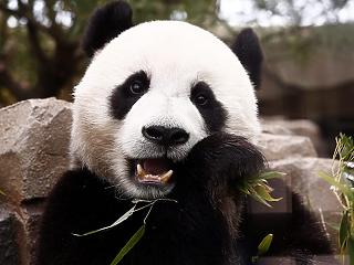 Megint jönnek a panda-kötvények