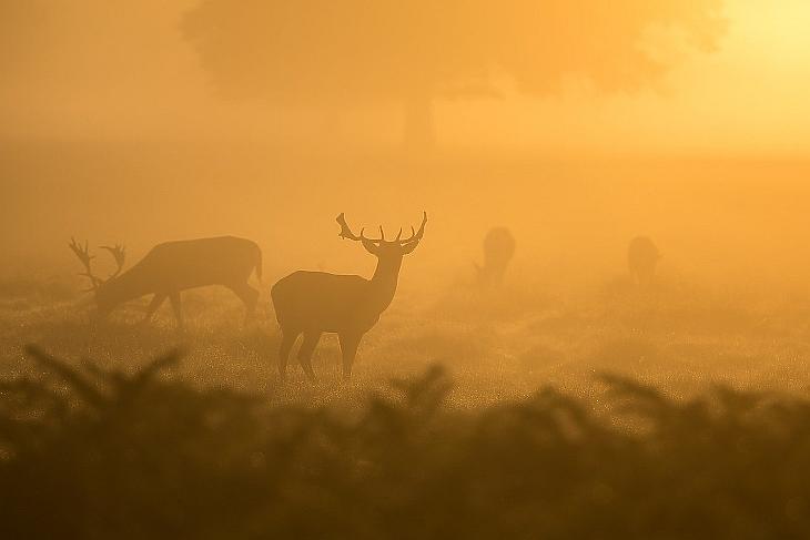 Népszerű kikapcsolódás a vadászat Fotó: Pixabay