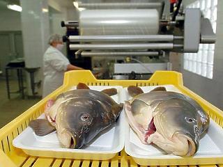 Hiába az áfacsökkentés, a karácsonyi hal 5-7 százalékkal kerül többe, mint tavaly