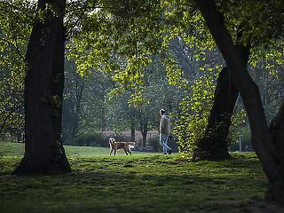 Most már a Városliget idős fái a sorosok
