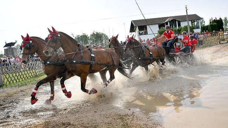Nemzetközi fogathajtóverseny a mezőhegyesi lovaspályáján (Fotó: MTI Fotó, Czeglédi Zsolt)