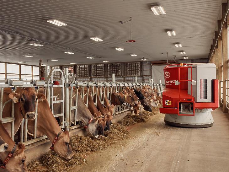 Robotizált tehénetetés a Rivendale Farmson. (Fotó: Ross Mantle / The New York Times)